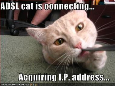 adsl-cat-is-connecting.jpg